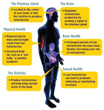 Assorted Low Testosterone Symptoms.